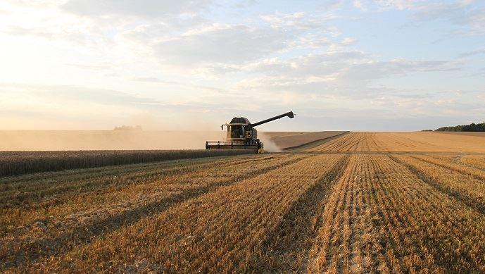 Le Maroc augmentera les droits de douane sur le blé pour aider les agriculteurs